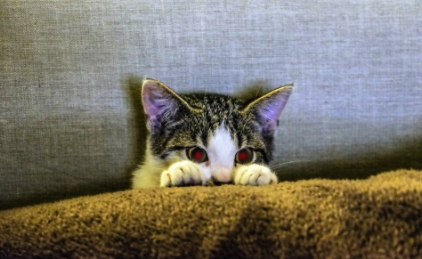animal-animal-photography-cat-96938.jpg