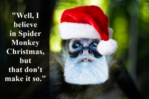 spider monkey christmas