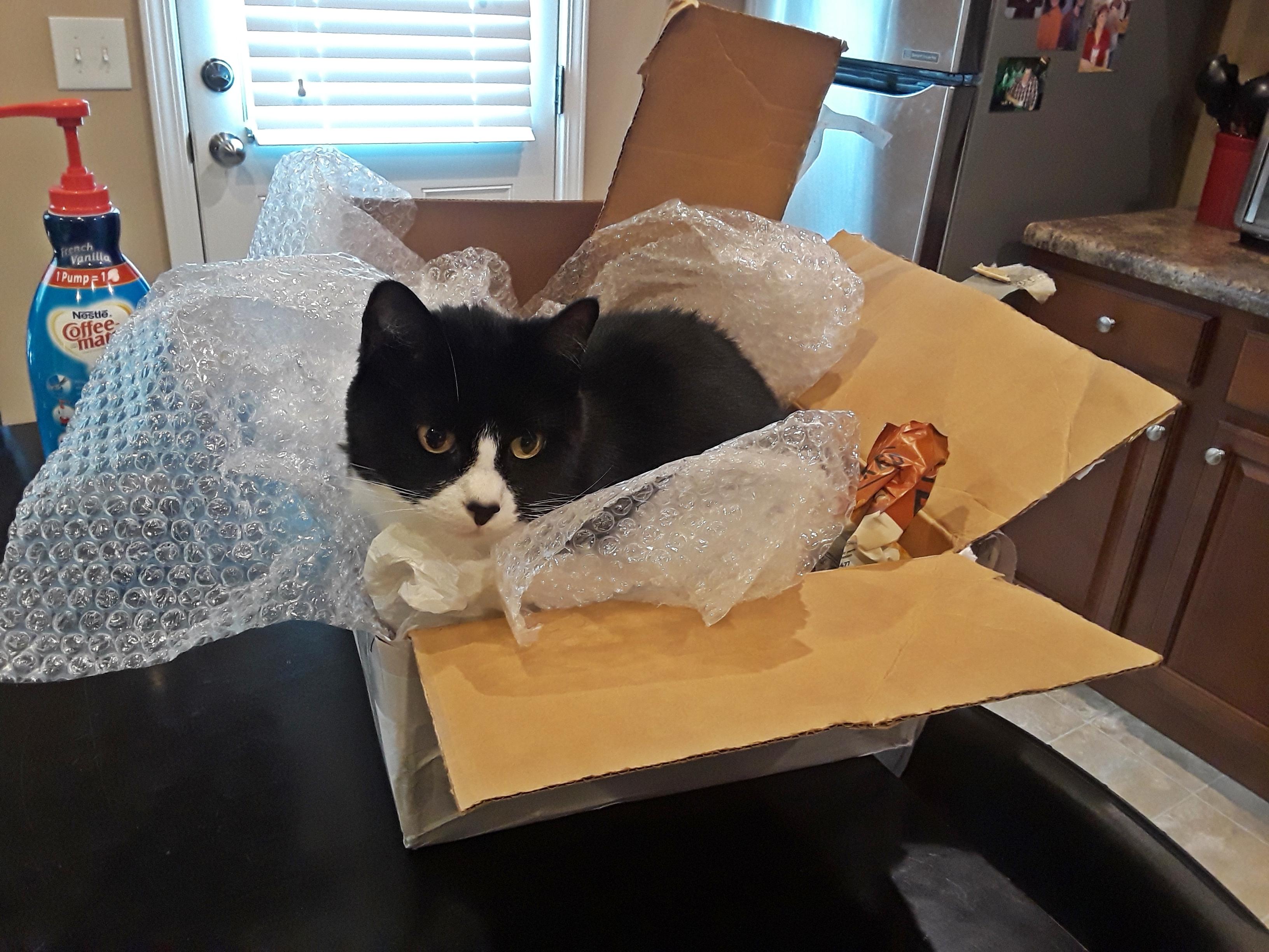 cat after trash